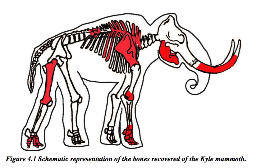 figure-4-1-kyle-mammoth-bones-eliann-stoffel-thesis
