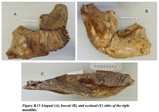 figure-b-15-kyle-mammoth-eliann-stoffel-thesis